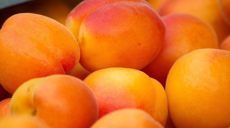 Armenia Apricot
