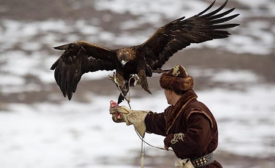 Falcon Show, Almaty
