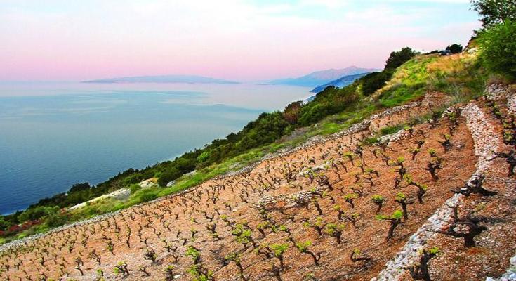 Go for Peljesac Wine Tours