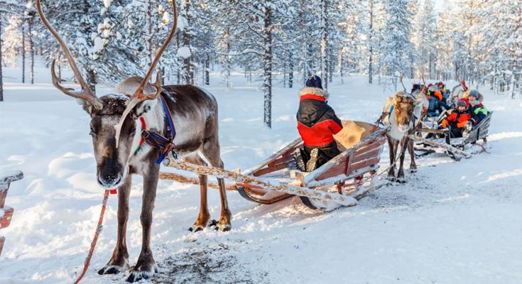 The reindeer sleighs