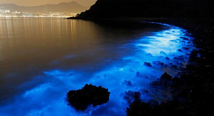 Experience-Bioluminescence