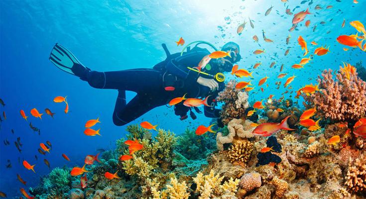 Explore-the-vibrant-coral-reefs