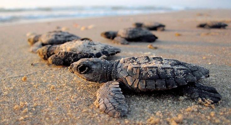 Witness-turtles-nesting